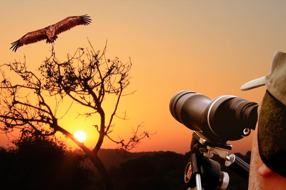 bird watching india